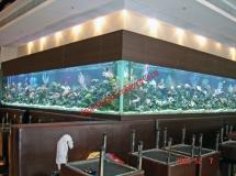 亞士厘道餐廳8米x6米珊瑚缸