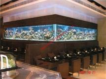 亞士厘道餐廳8米x6米珊瑚缸1
