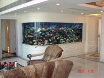 深圳住宅37樓3600L珊瑚缸