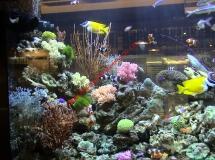 雅蘭中心2300L珊瑚缸1