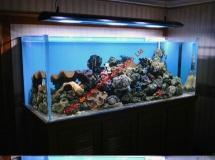 廣州住宅1800L珊瑚缸
