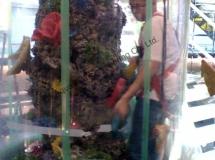 大型人造珊瑚